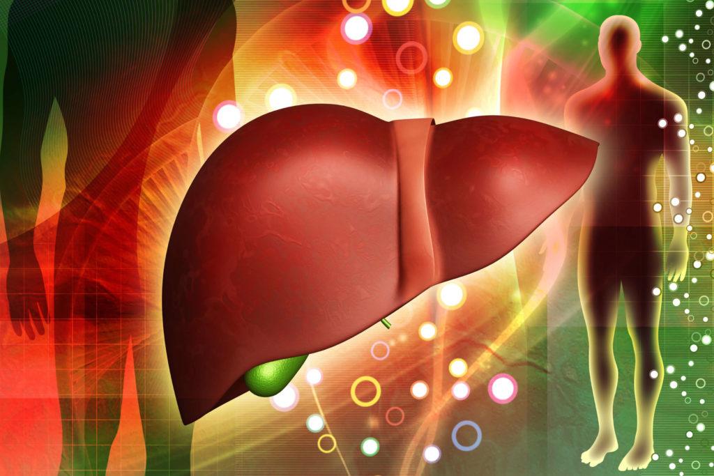 entgifte Deine Leber - Leichter Leben mit Hashimoto - Phase III